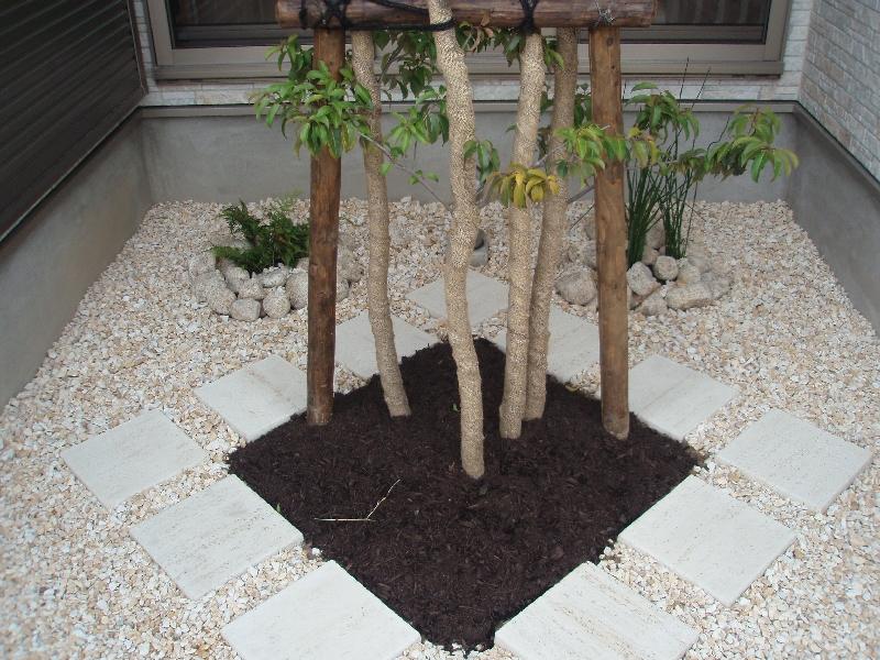 中庭の植栽。