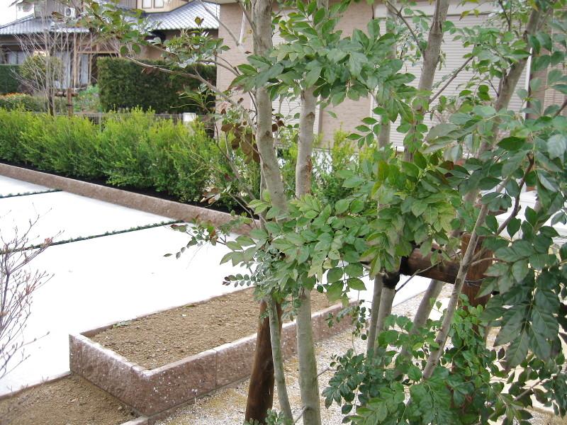 植栽と花壇。